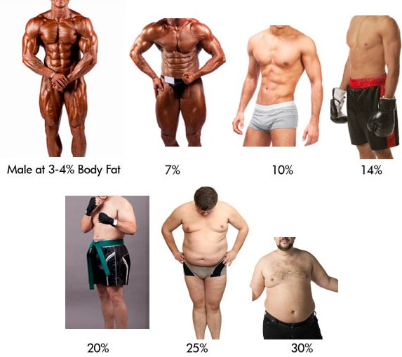 mens visual bodyfat chart